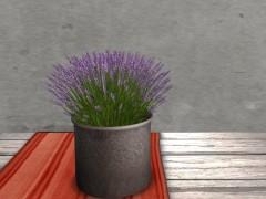 low-prim-plant-lavender
