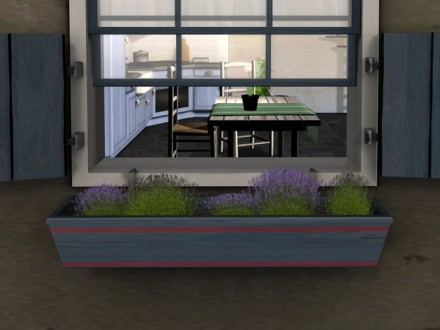 Planters with lavender