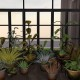 mesh potted plants