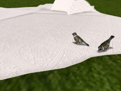 Sparrows with bird sounds