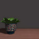 succulent_plant_sixties_pot