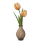 Dutchie spring gift color changeable tulips